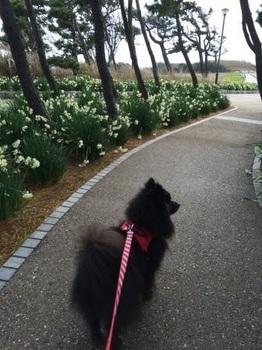 三浦海岸2015の14-.JPG